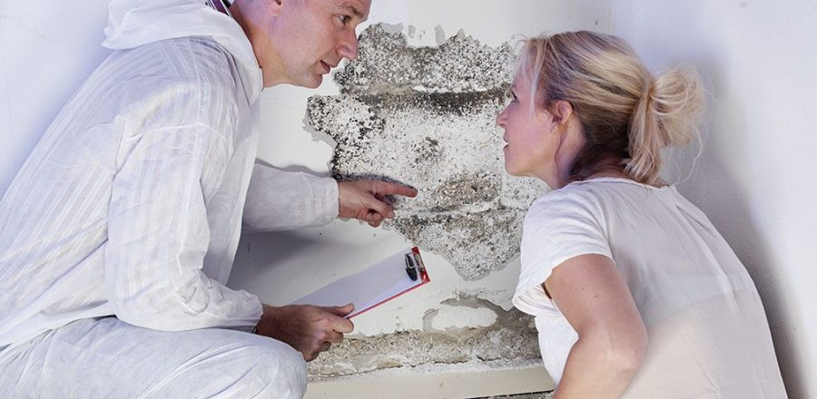 Investing in a New Home? 3 Reasons You Can't Skip the Pest Inspection