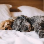 Pet-Friendly Homes: Some Selling Do's and Dont's